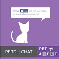 Pet Alert 01 perdu chat ballad et vous