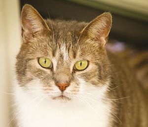 chat photo porte ouverte ballad et vous