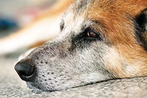 chien triste ballad et vous