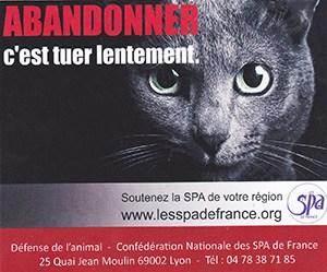 Campagne contre l'abandon chat ballad et vous