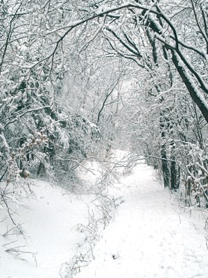 snow forest trail