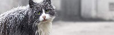 Chat dans la neige ballad et vous