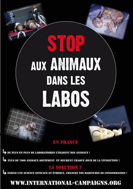 International Campaigns journée mondiale animaux labo ballad et vous