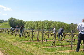 Pause des diffuseurs dans les vignes