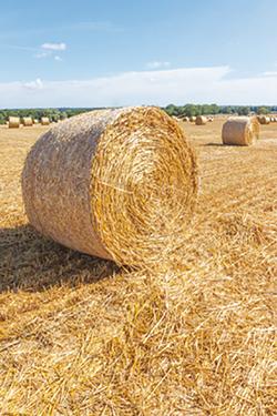 Harvest bale in field