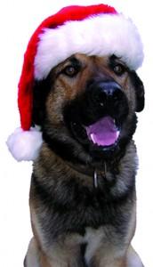 Chien avec chapeau de Noël ballad et vous