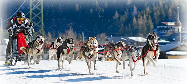 Championnat de France de chiens de traineau 3 ballad et vous © Verdy