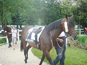 Hippodrome cheval au rond de longe Aix-les-Bains ballad et vous
