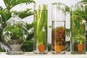 Plantes d int rieur sous verre ballad et vous for Plante sous verre